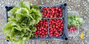 Frutta e verdura 100% biologici