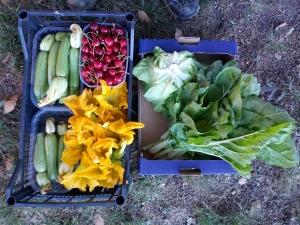 Frutta e ortaggi biologici a Imola